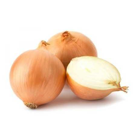 OIGNON BLANC - البصل الابيض