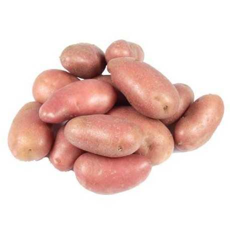 POMME DE TERRE ROUGE - البطاطس الحمراء